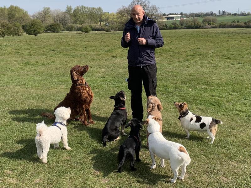 Dog training in Stevenage